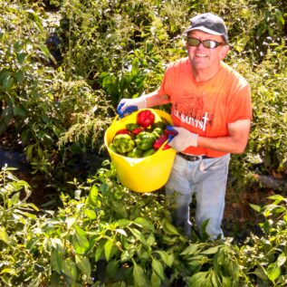 Gleaning Provides Fresh Produce for Families in Need